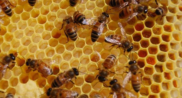 nyers méz
