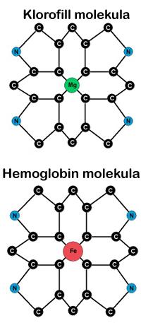 klorofill-molekula