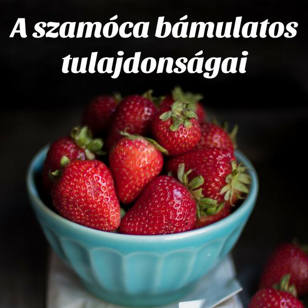 szamoca1
